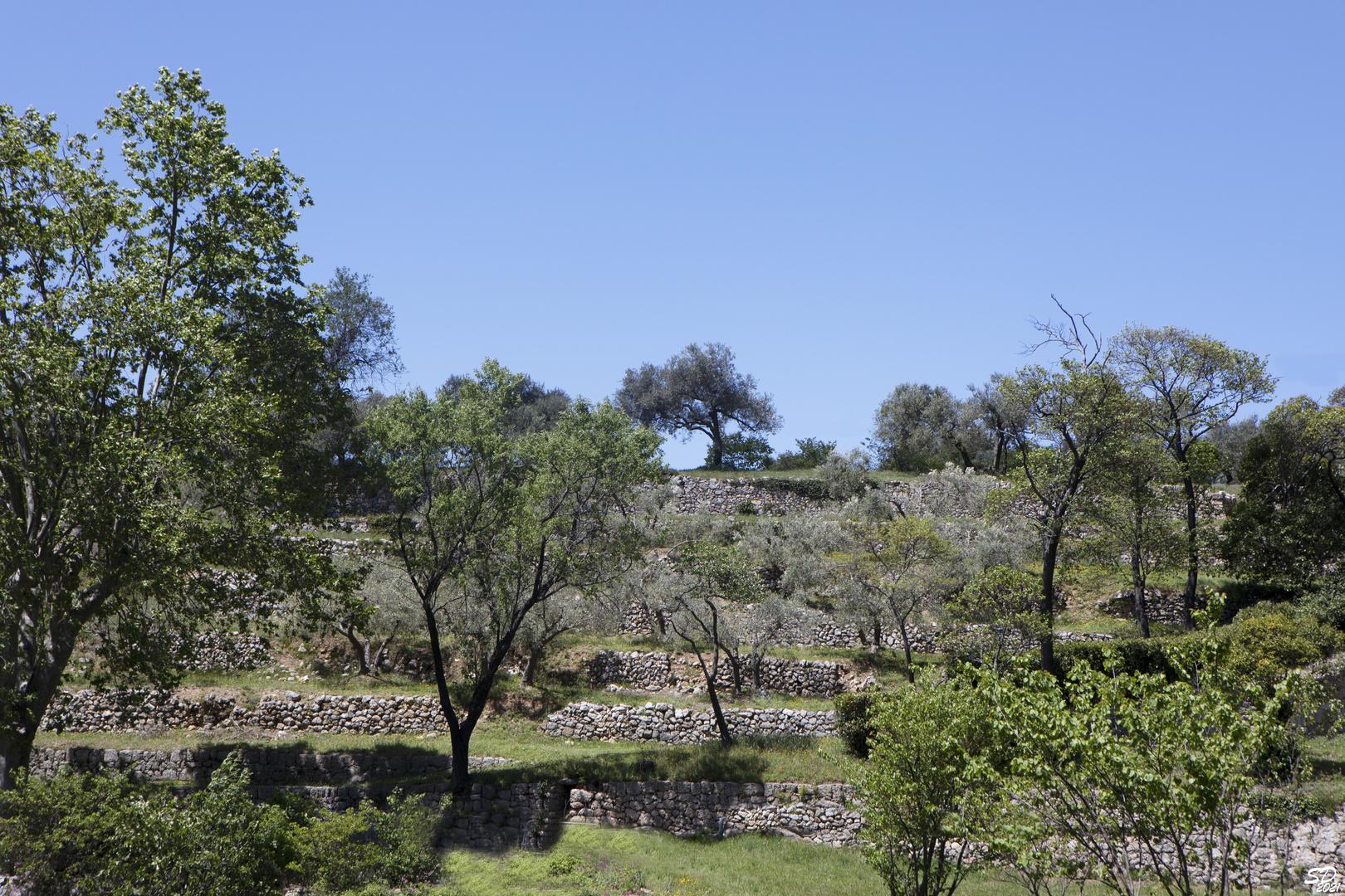 Restanques provençales ou Bancaou