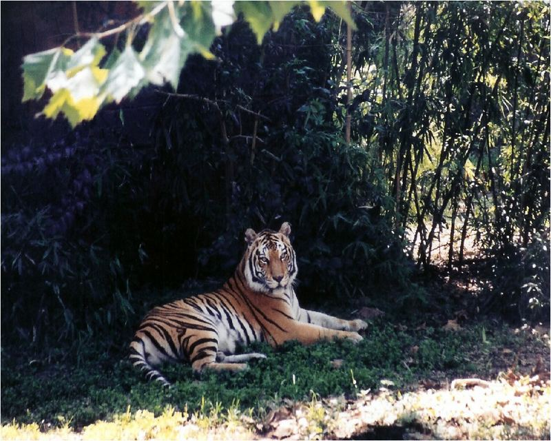Resting in the shade