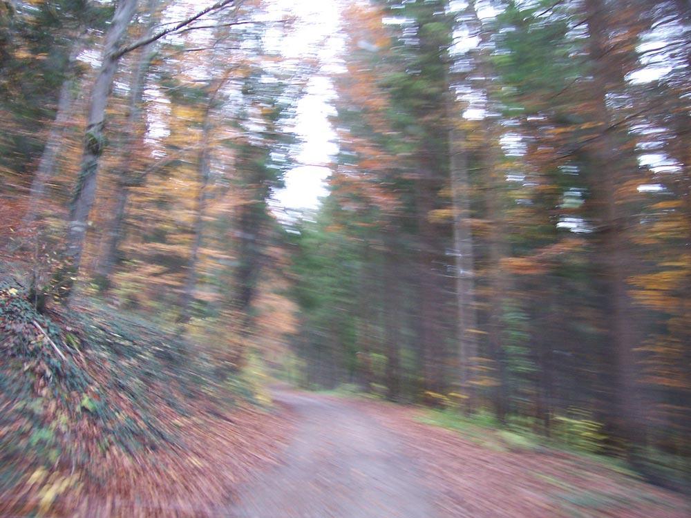 Restless Woods
