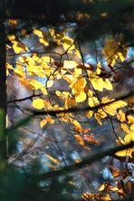 Restlicht auf den Zweigen