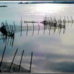 Reti in laguna