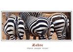 Retrospettiva sulla zebra