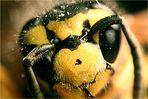 Retrotest mit Wespe