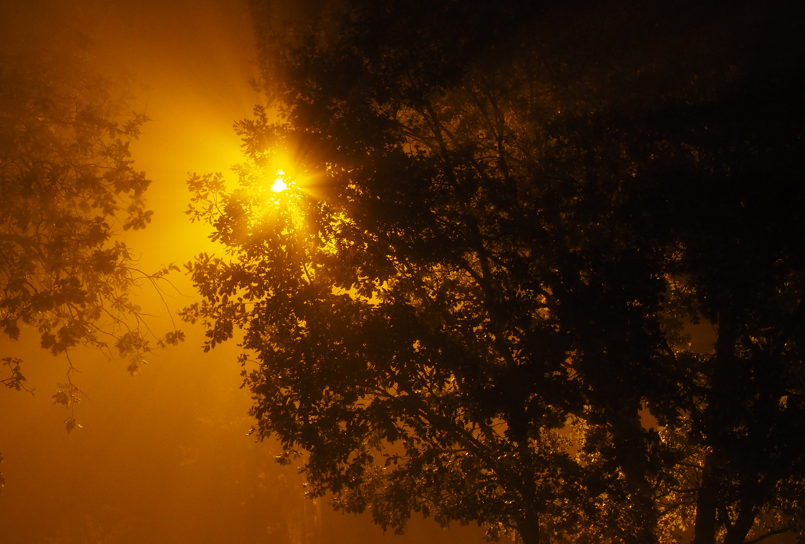 Reverbère nocturne dans la brume