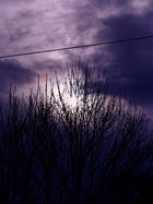 Rhapsodie in Purple