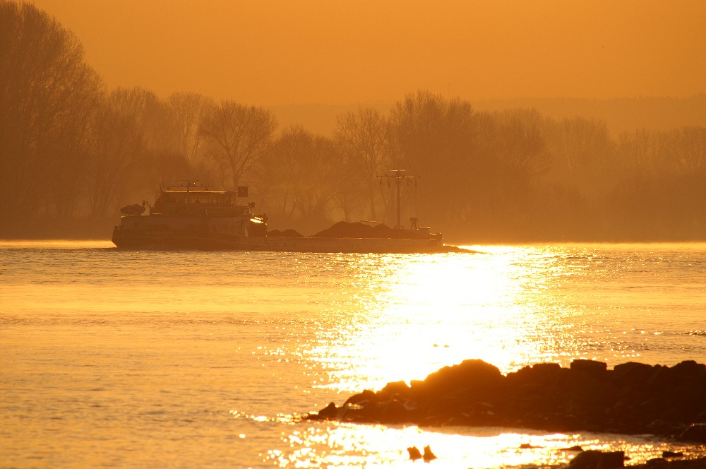 Rhein bei Hersel an einem Wintermorgen
