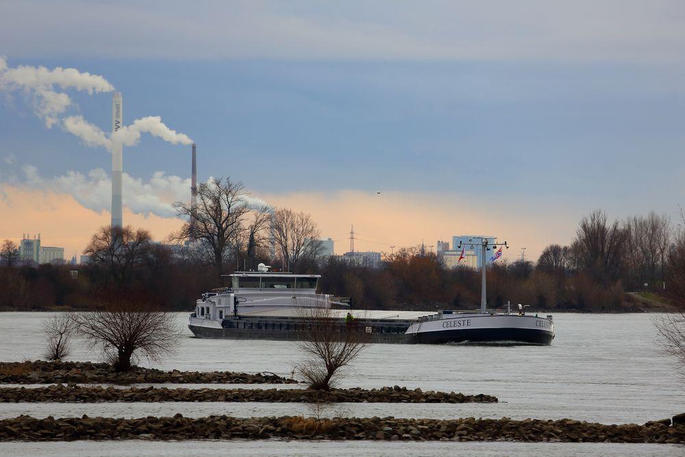 Rhein bei Lampertheim