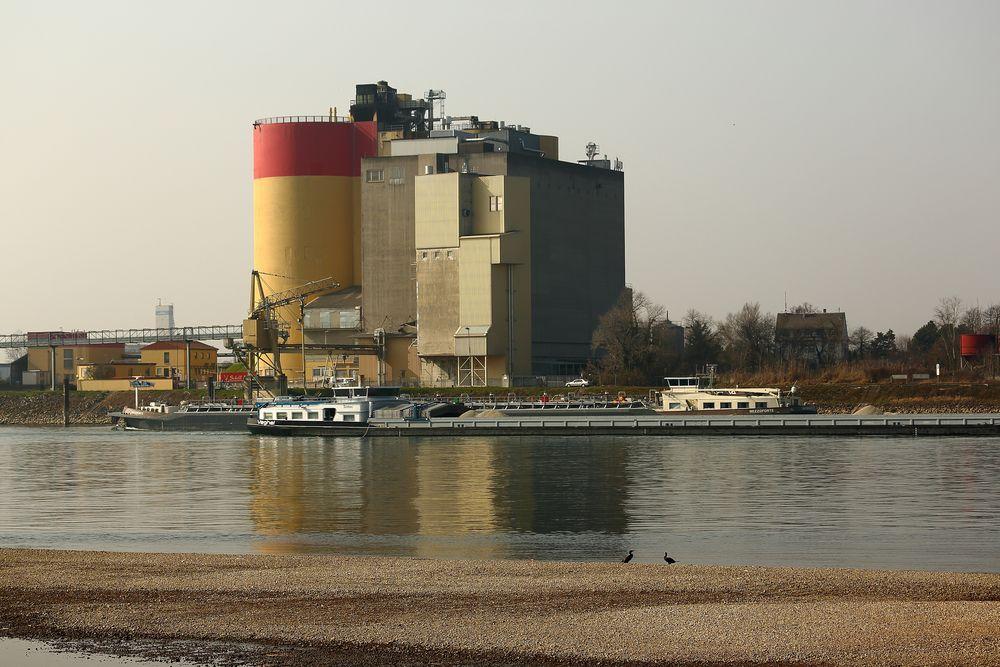 Rhein bei Worms-Rheindürkheim (II)