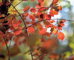 Rheinauen - Herbst
