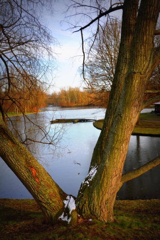 Rheinauensee