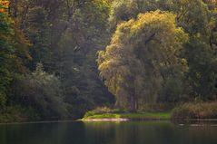Rheinauenweide....