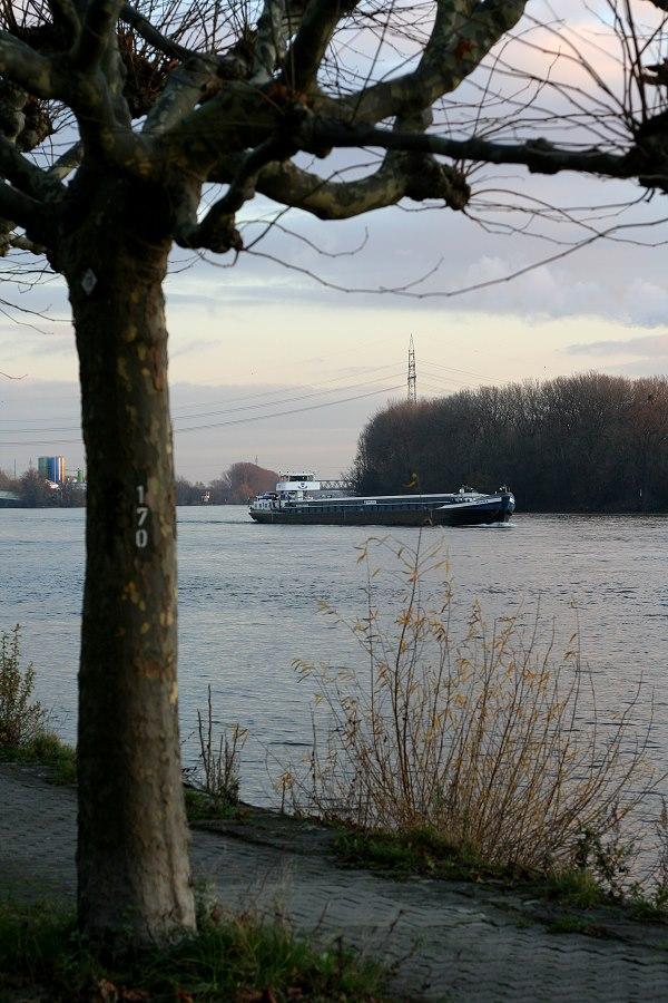 Rheinblick bei Baum 170
