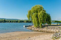 Rheinbucht bei Heidenfahrt  32