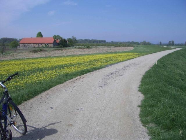 Rheindamm im Frühling