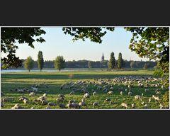 Rheinrasen-Mäher