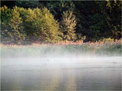 Rheinthaler See um sieben Uhr morgens