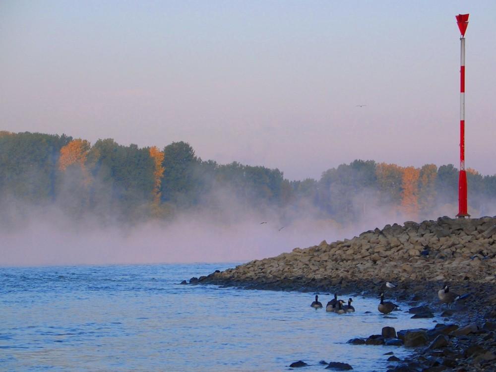Rheinufer am frühen Morgen