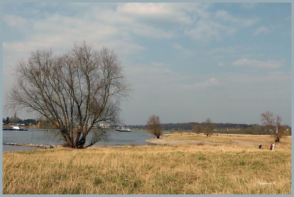 Rheinufer in Düsseldorf-Benrath im Frühling