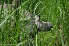Rhino Baby mit Mama