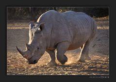 Rhino encounter