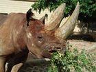 Rhino hautnah...