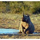 Rhino.... Sitz!