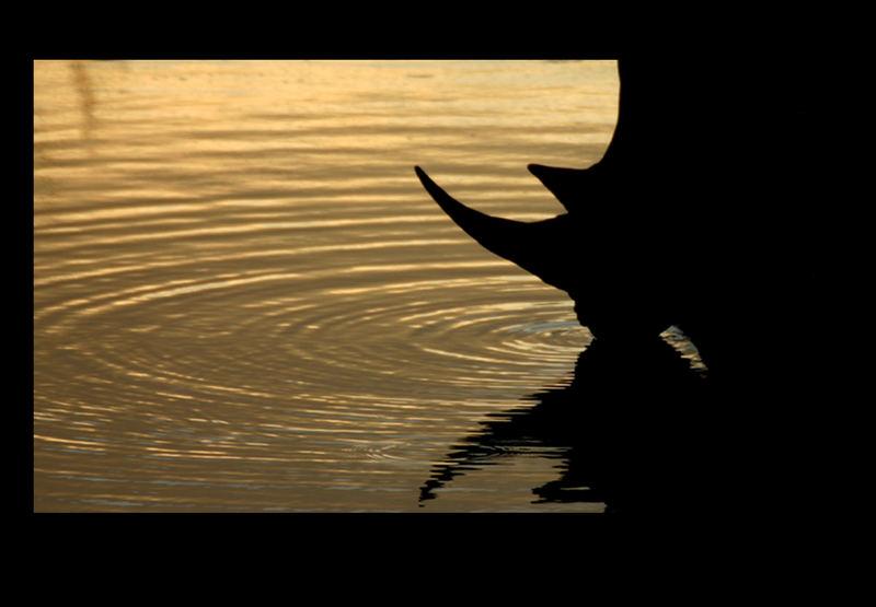 Rhino @ Sunset