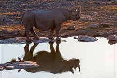 Rhino und Vögelchen im Abendsonnenschein