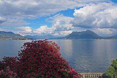 Rhododendrenblüte am Lago Maggiore
