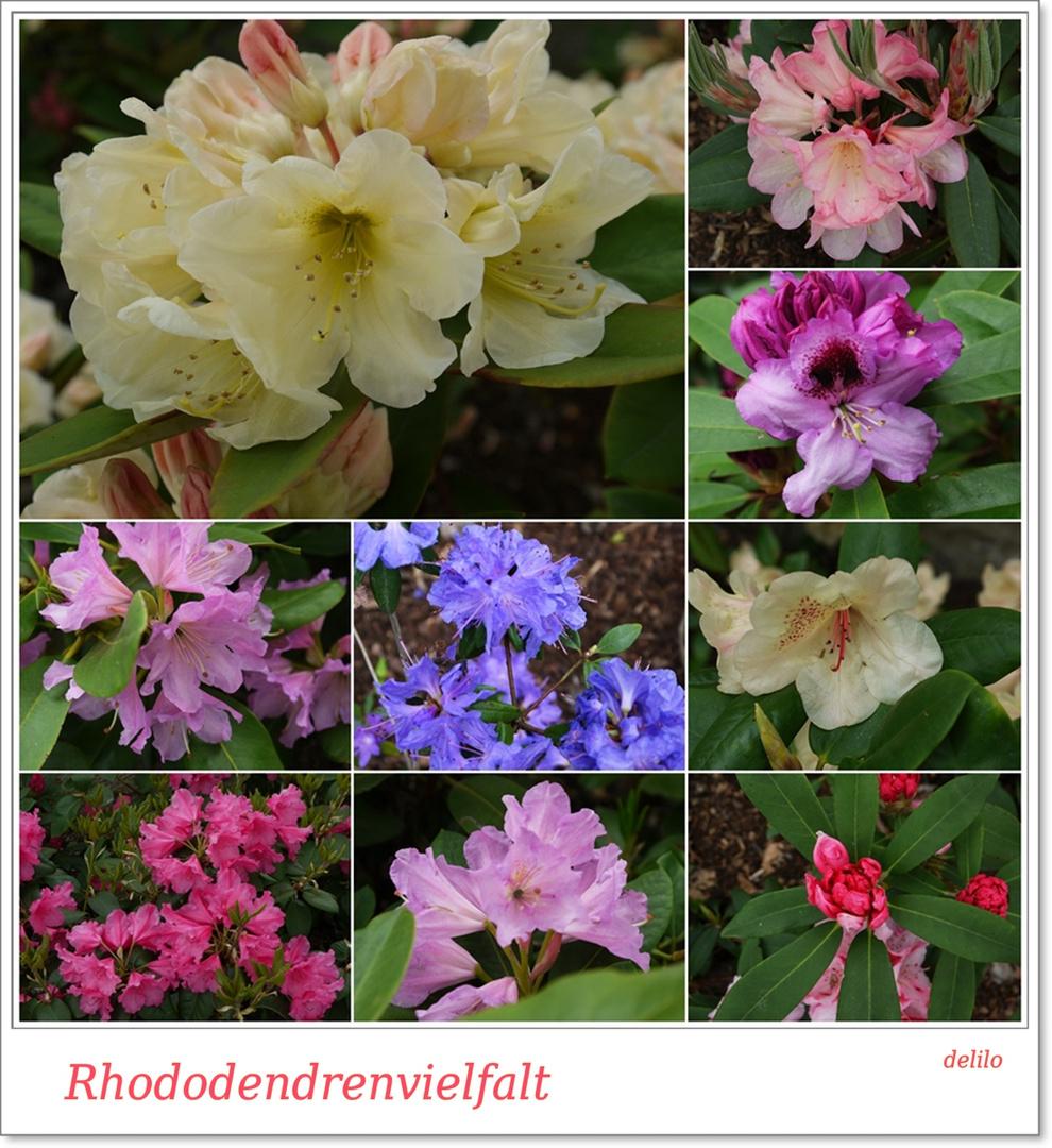 Rhododendrenvielfalt