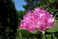Rhododendrenzeit