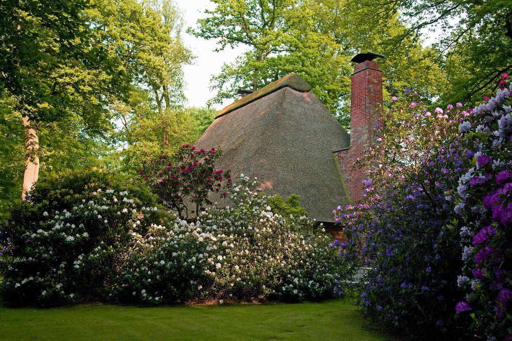 rhododendron-blüte in der lehnhofsiedlung