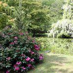 Rhododendron - Blüte nach Regen -8-