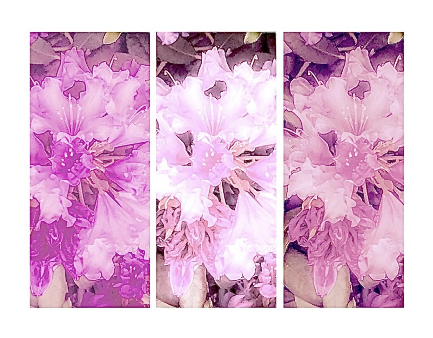 Rhododendron Farbtöne