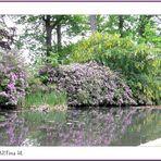 Rhododendron-Fülle  (mit Gedicht)