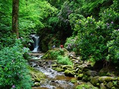 Rhododendronblüte am Geroldsauer Wasserfall
