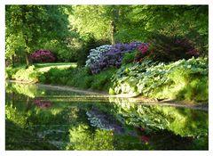 Rhododendronbüte im Schlosspark