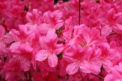 Rhododendrongarten Dresden Loschwitz (13)
