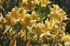Rhododendronpark DD