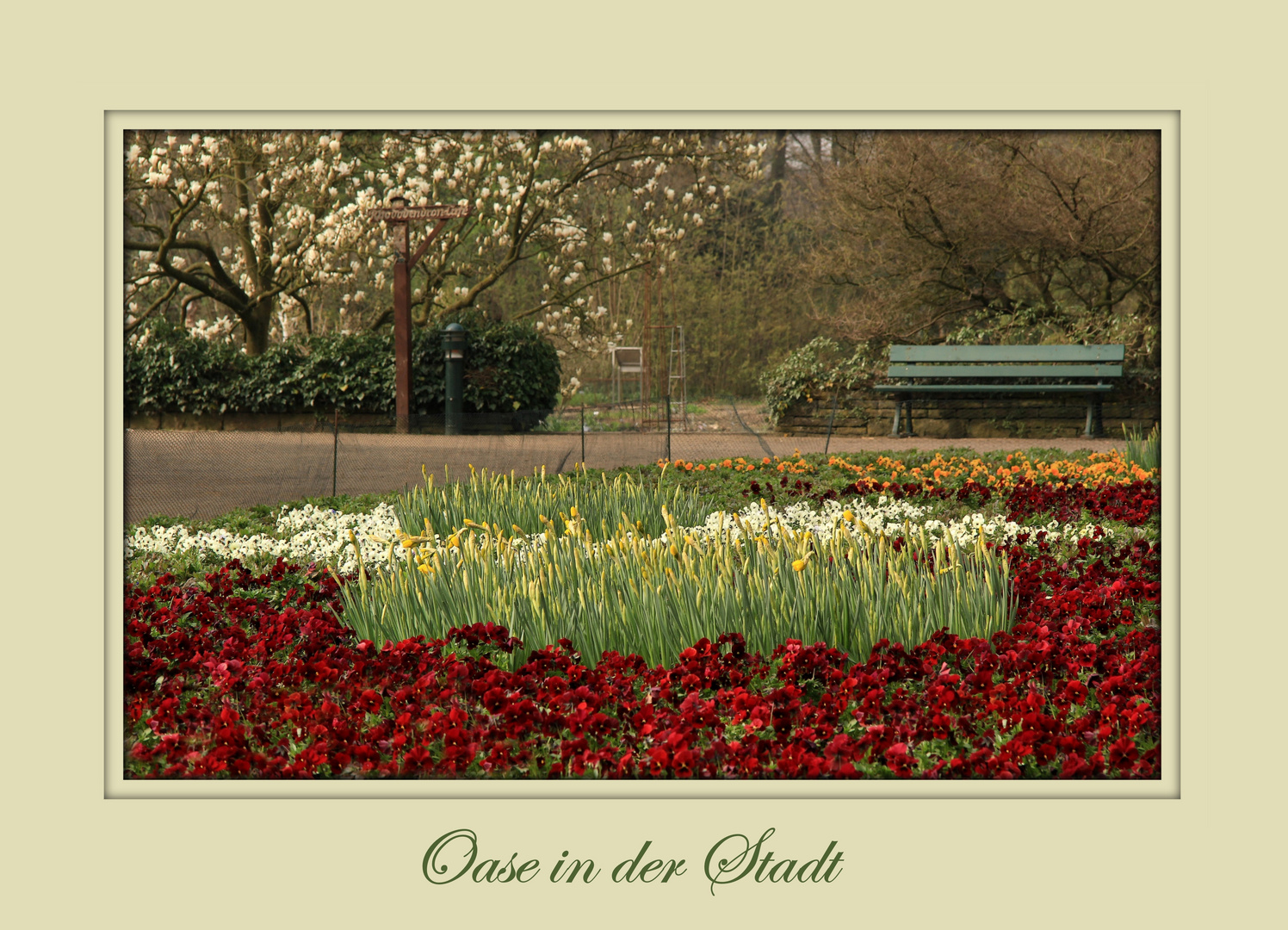 Rhododendronpark im Frühling