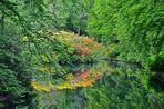 Rhododendronspiegelungen