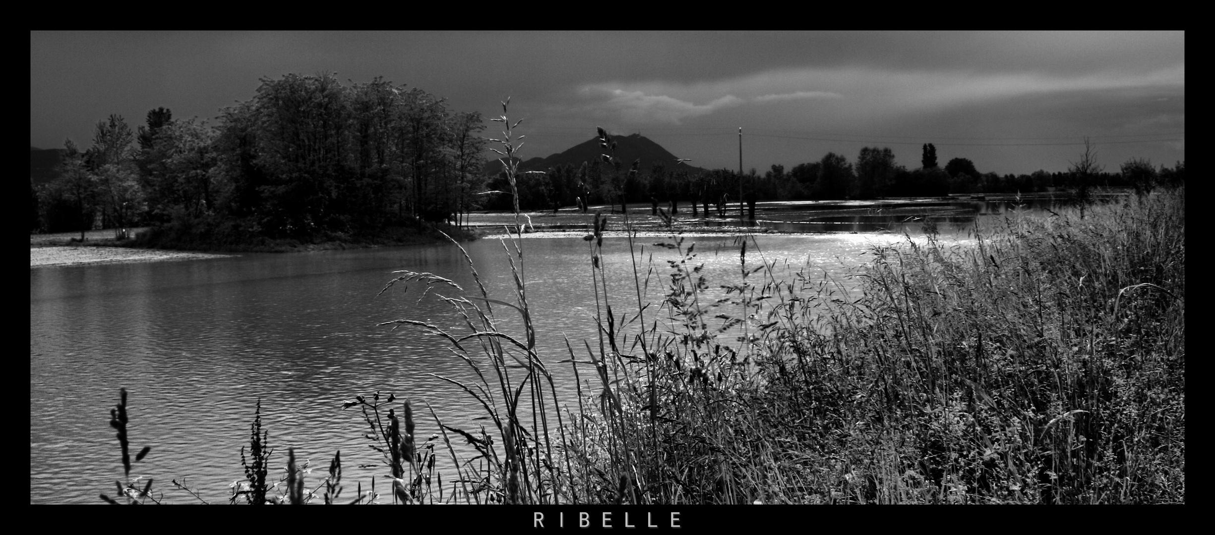 ribelle
