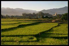 ... Rice paddies near Hsipaw ...