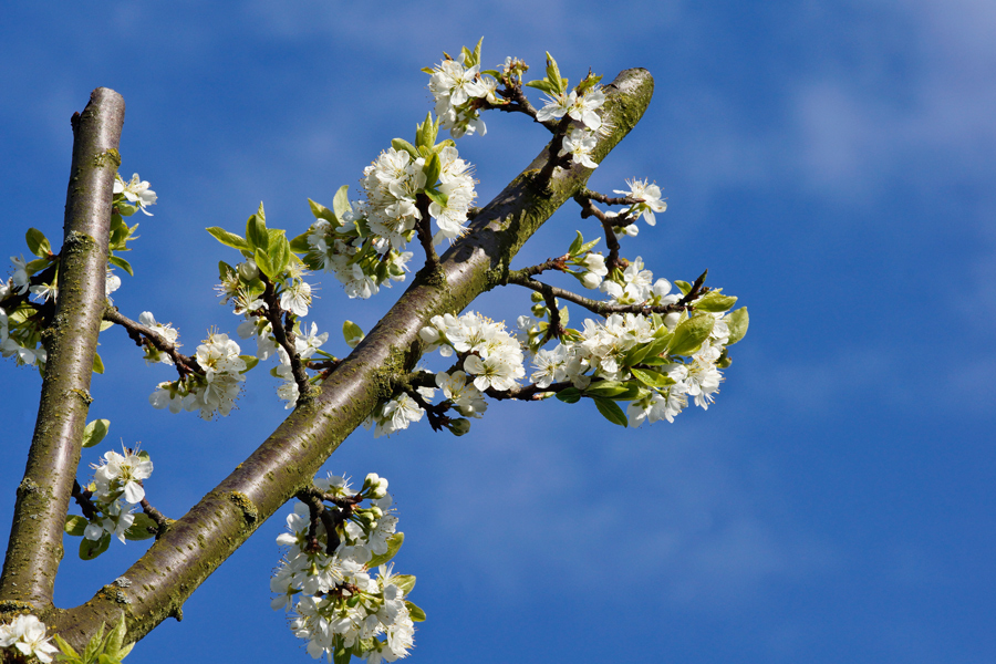 Richtung: Frühling!