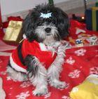 Ricky und Weihnachten