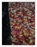Ricordi d'autunno