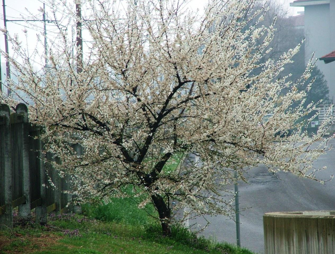ricordi della primavera!