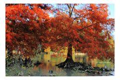 Ricordo di autunno