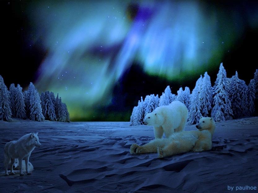 Ricordo di Paolo Zappa - Incontri sotto l'aurora boreale
