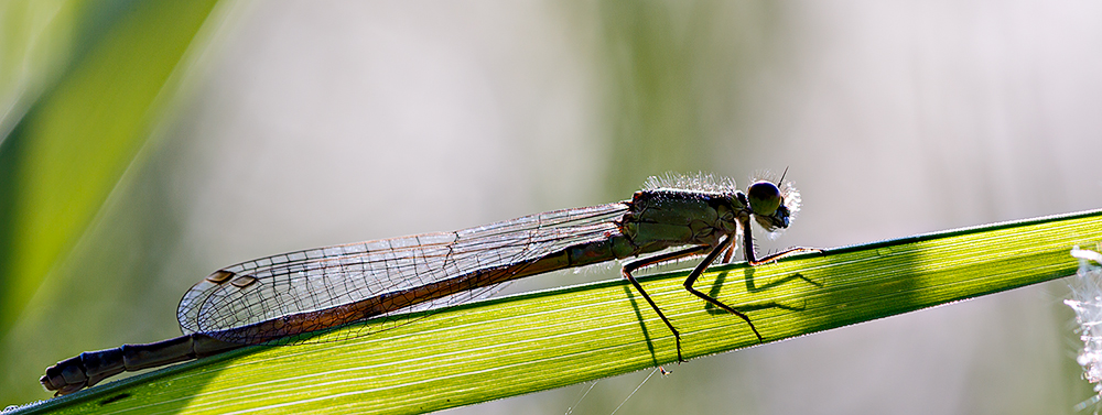 Rider on the blade of grass